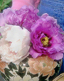 Creating table centerpieces from my gorgeous tree peonies. (OAD: 5/20/1998)