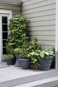 Learn how to grow a garden no matter the size of your backyard with our small space gardening tips.