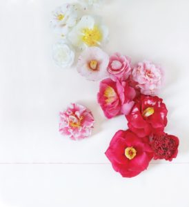 As is our custom, there is a wonderful glossary of camellias that shows the vast range of colors and forms of this species.