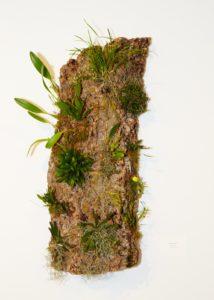 "Andrea Mason's ""Bark Life"" incorporates live tropical flora."