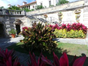 The center of the Secret Garden is crowned with a giant specimen of Crinum 'Queen Emma Supreme'.  This plant has only been here for 4 years, planted from a 24-inch pot!  The vibrant colored plants flanking it are yellow Sanchezia speciosa (Peruvian Candle), and fuschia Cordyline 'Red Sister' (Ti Plant).