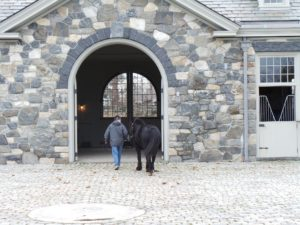 Betsy leads Ben Chunch back to the stables. He is a very welcome addition to our Bedford family!
