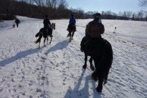 Baxter Preserve is a popular destination for hikers, dog walkers, and horse-back riders.  Wendy Terebesi and her horse, Brian, joined our group.