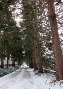 This beautiful tree-lined lane is the approach to Jody's farm.