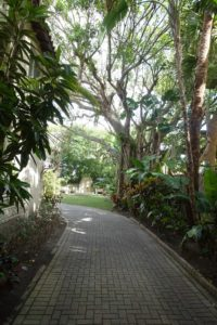 The home's driveway under a canopy of foliage - John and Bill Eberhardt did all the gardening themselves.
