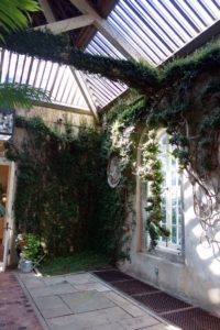 The ficus, just one plant, now covers the inside walls and even swags across each of the Palladian windows.