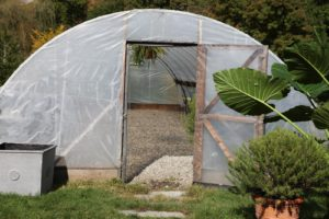 Many of the lower ones will be placed inside the heated hoop house.
