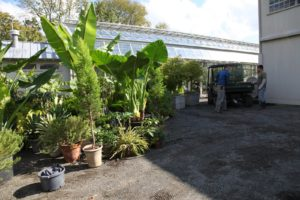The taller plants will find a winter home in the glass 'cold house.'