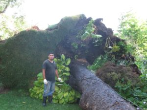 Wilmer standing next to the same tree with gorgeous plantings uprooted - the wire is a lightning rod - somehow very ironic.