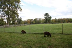 Next to the allée is the sheep pen, which we are in the process of enlarging.