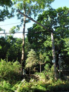 Even utility poles were broken