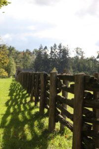 Great shadows cast by the paddock fencing