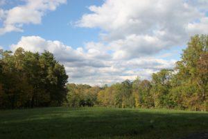 One of three hay fields