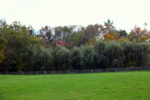 Another view with fall foliage beyond