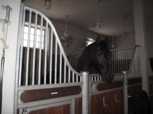 Because the gates leading to the paddocks had yet to be cleared, the horses were kept indoors for a longer stretch of time than they were used to.