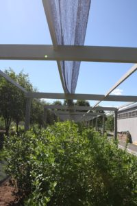 The next step is to cover the pergola with bird netting.