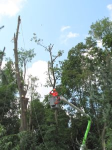 This kind of tree removal requires special equipment and the expertise of professionals.
