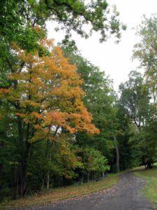More autumn alongside a carriage road