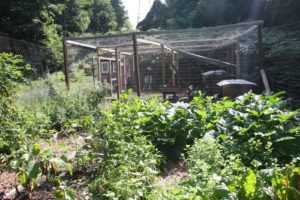 The vegetable garden with the chicken coop beyond