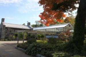 This maple adjacent to the greenhouse is gorgeous every autumn.