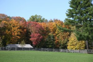 This line of colorful trees abuts the lower paddock where the run-in shed is.