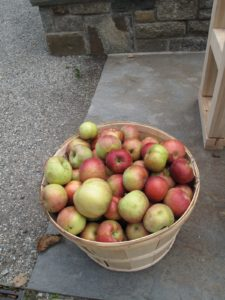 The apples that grow on my farm are excellent for eating, baking, and for making cider.