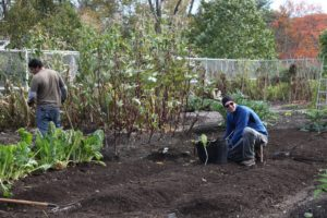 Shaun and Wilmer have been busy closing up the vegetable garden, leaving the cold-hardy crops.