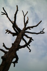 This tree served as an original line-marker indicating the boundary between the newly formed United States and the Cherokee Indian Nation as defined by the Holston Treaty under President Adams in 1797.