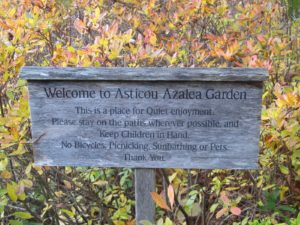 The Asticou Azalea Garden is an oasis intended to encourage visitors to relax and reflect.