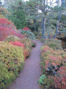 Little pathways meander throughout the garden.
