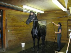 After the ride, Sasa is given a cooling shower