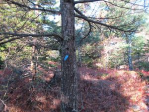 The blazes of this trail are marked with blue rectangles.