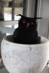 A spooky black owl