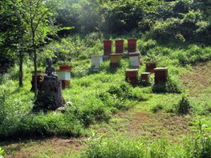 Some of Marina's hives sit upon a hillside behind her house.