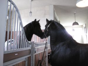 One by one, Betsy allowed the other horses to meet and greet their new stablemate.  It has been a friendly and smooth transition.