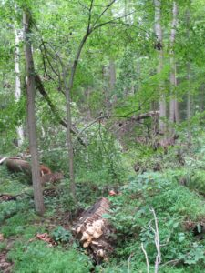 Deep in the woods - It will be some time before the twister damage can all be cleaned up.