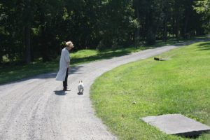 Susie Ercole, my executive assistant at the farm, is delighted to have Sharkey and Francesca accompany her on an errand.