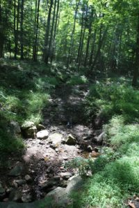It has been very dry lately and all of the small streams on the property have dried up.