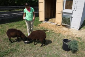 Along with fresh-cut grass, Dolma feeds the pair a bit of special grain.