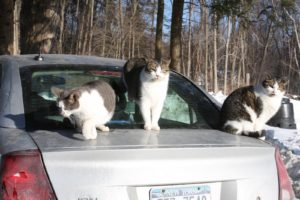 Lisa is a true animal lover.  Her large menagerie includes these rescue felines, who were enjoying basking in the warmth of the sun.
