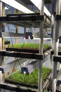 These vegetable seedlings will eventually be transferred into the hoop houses and ultimately, outdoors.