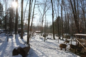 The wooded paddocks look so nice blanketed with fresh snow.