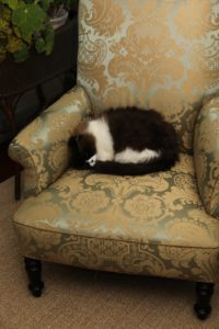 Vivaldi found a cozy chair.