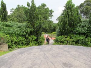 The gardens are vast and verdant.  We happened upon some newly weds.