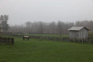 Sasa happily grazing on fresh green grass