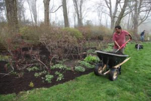 And then the bed was top dressed with the compost.