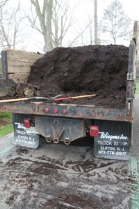 The dump truck filled with our own rich compost was parked next to the tree peony bed.