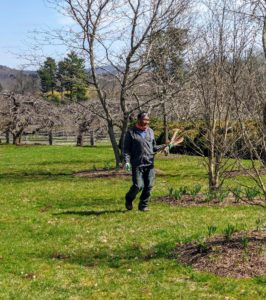 Pete walks around the area to be aerated to pick up any twigs that could possibly get lodged in the tines.