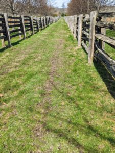Pete just finished aerating this section of grass between two of the horse paddocks.