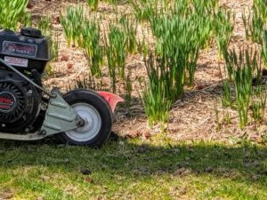 This is also a good time to check for any weeds that need removing.
